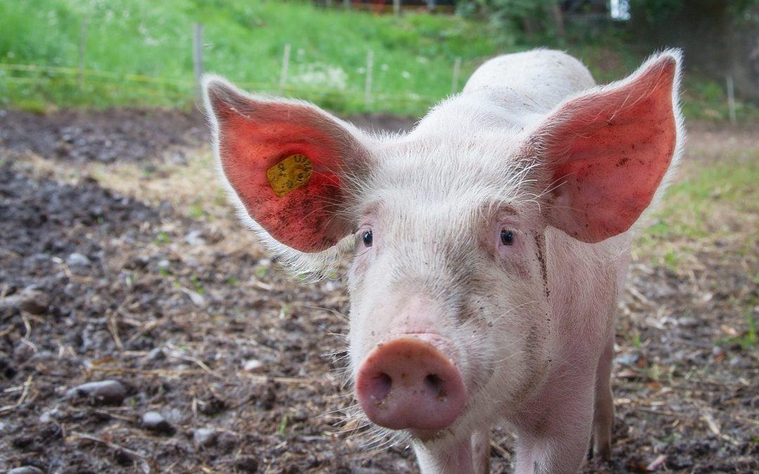 Bases Mercado XI Matanza del Cerdo